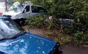 В сети опубликовали фото машин, изуродованных упавшими деревьями В Брянске