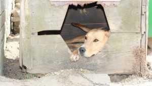 Брянский приют для бездомных животных попросил о помощи