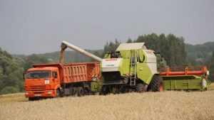 Новый урожай потянул брянских аграриев вверх