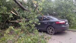 В Брянске ветер обрушил деревья на машины и повалил забор на набережной