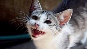 Жительницу брянского села покусала бешеная кошка
