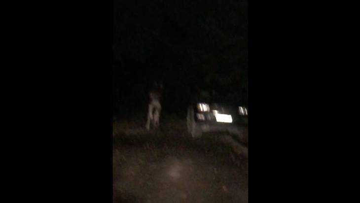 В Брянске сняли видео о загулявшем ночью в Новом городке лосе