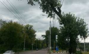 В Брянске сняли видеосюжет о нависших над дорогой дереве и столбе