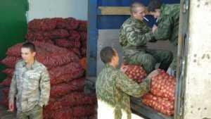Рабство мигрантов на брянском овощном рынке началось с рабства солдат
