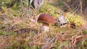 Заблудившаяся в лесу брянская пенсионерка вернулась домой с грибами