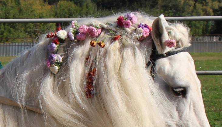 Брянские молодожены пересели с лимузинов на тройки лошадей
