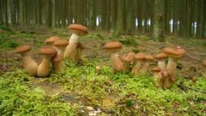 Брянские пограничники «порадовали» грибников штрафами