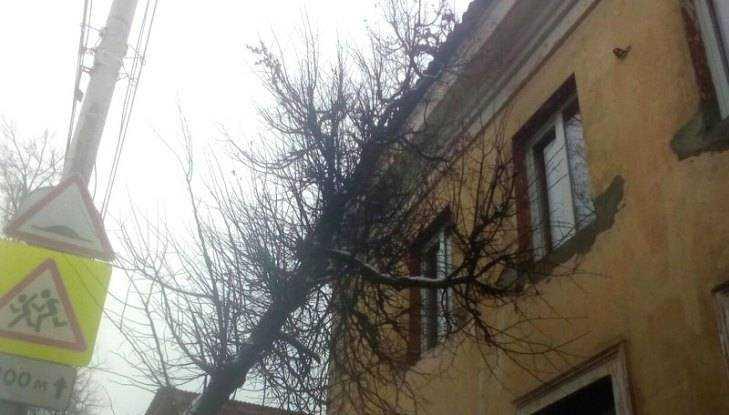 В Брянске на улице Фокина дерево рухнуло на двухэтажный дом