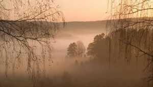Брянцам 28 октября пообещали дожди, туман и 8-градусное тепло