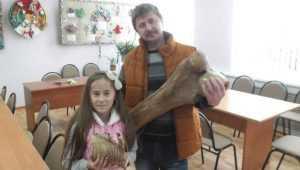 Музею Брянского района подарили кость древнего мамонта