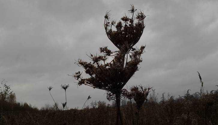 О сильном ветре МЧС предупредило брянцев через SMS