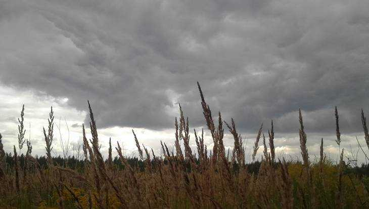 В Брянской области объявили предупреждение о дождях и сильном ветре