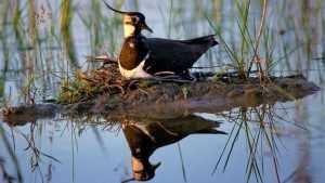 Заповедник «Брянский лес» призвал покормить птиц