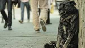 У добрых брянцев попросили денег на приют для собак