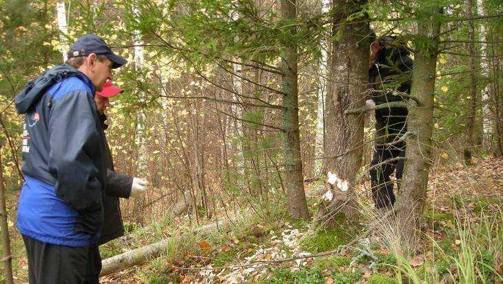 Найдены пропавшие в брянском лесу дети