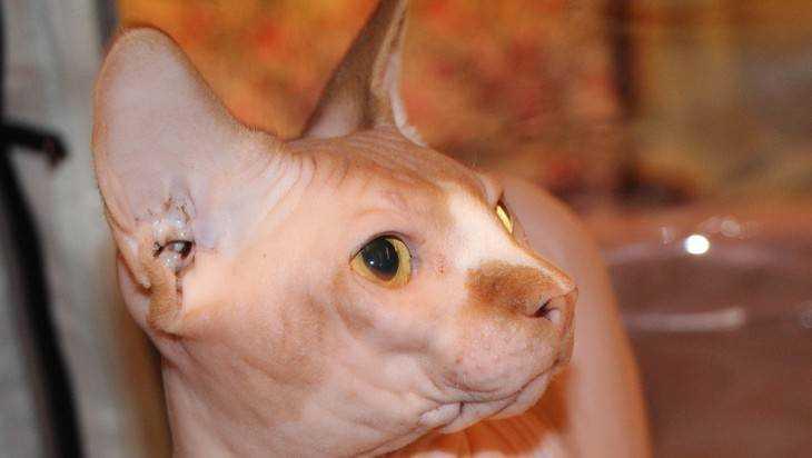 Бешеная кошка искусала в Почепском районе семью