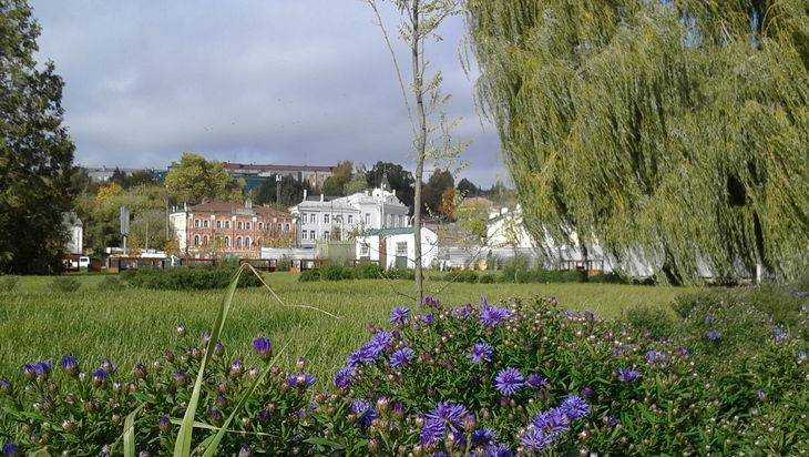 Депутаты высказали благие пожелания о превращении Брянска в город-сад
