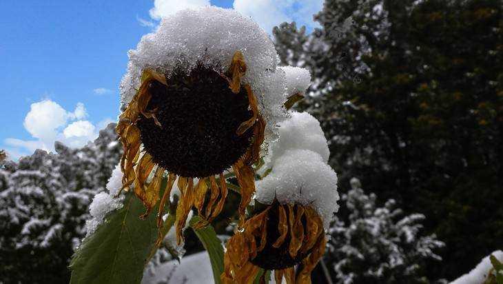 Метеорологи рассказали, когда в Брянской области пойдет первый снег