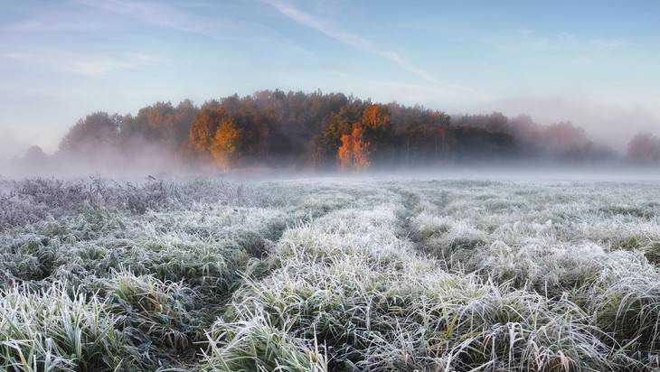 В Брянскую область пришли ночные трехградусные морозы