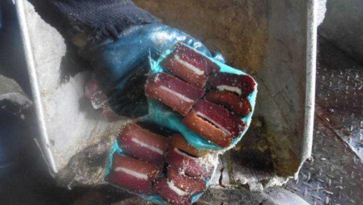 Брянск отверг опасные мясные деликатесы из Молдавии