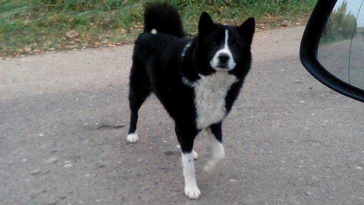 Брянцев попросили найти хозяев потерянной собаки