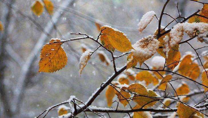 Брянской области 29 ноября пообещали снег и 7-градусный мороз