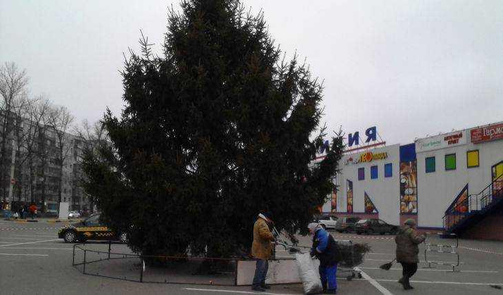 В Брянске у гипермаркета «Линия» установили новогоднюю живую елку