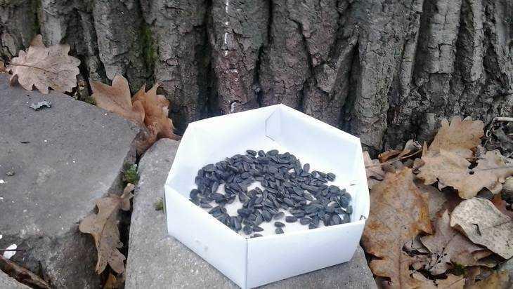 Добрые брянцы начали подкармливать семечками живность в парке