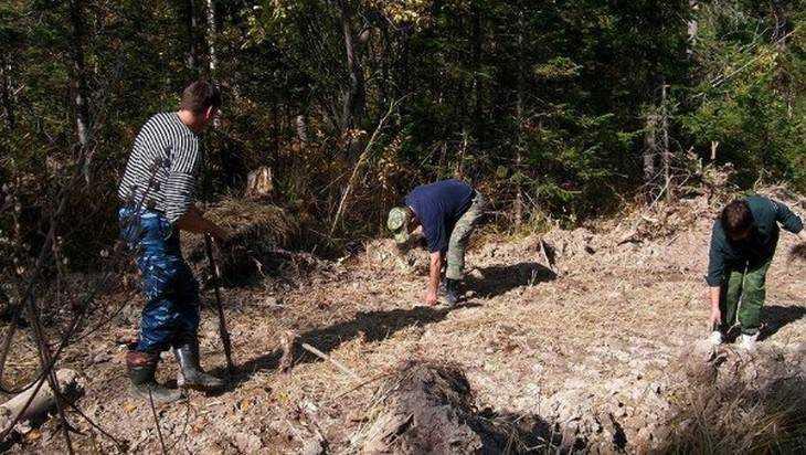 Жители Белых Берегов без принуждения вышли на лыжню с лопатами и пилами