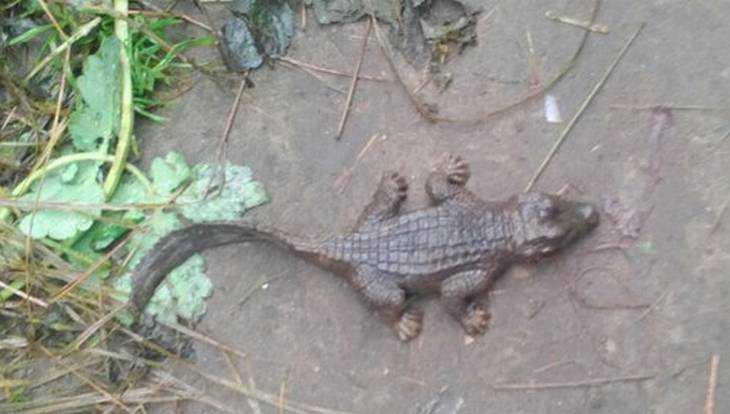 Вылезший из травы рукотворный крокодил перепугал в Новозыбкове девушку