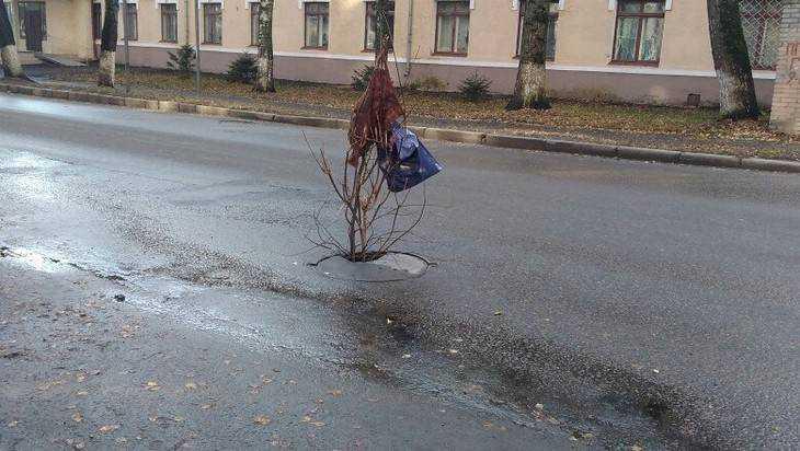 В Брянске хилыми веточками обозначили опасный люк на улице Горького
