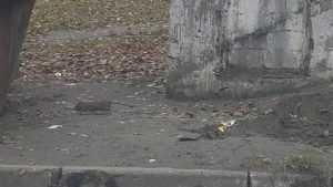 В Брянске сняли мрачное видео нашествия крыс на детсад «Зёрнышко»