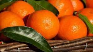 К новогодним праздникам в России подешевеют апельсины и мандарины