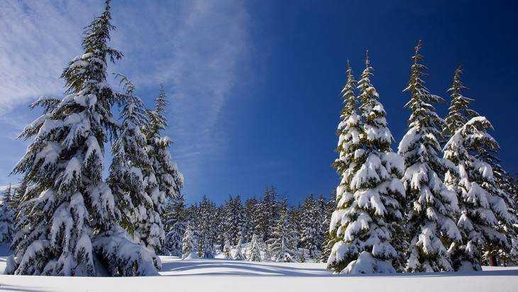 Стало известно, когда в Брянской области начнется зима