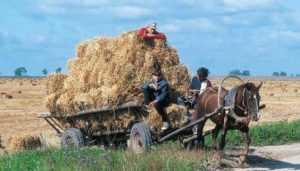 Скотника брянского колхоза покалечил упавший с телеги тюк соломы