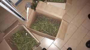 В Брянске полиция закрыла лабораторию амфетамина и марихуаны