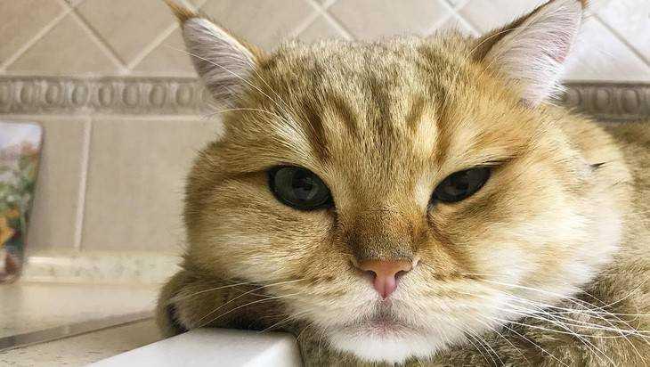 Трусливый кот Леон прославил Брянск на весь мир
