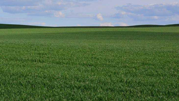 В Погарском районе Брянщины спасли почти тысячу гектаров пашни