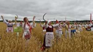 Брянское село получило рекордные урожаи зерна и картофеля