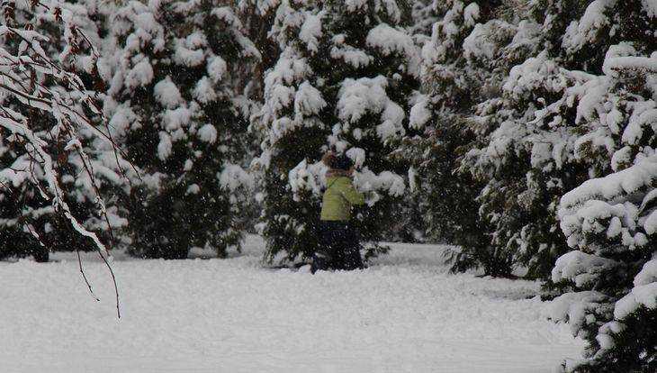 Жительница Брянска обвинила чиновников в краже новогодней елки