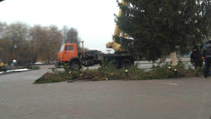 В Брянске на Кургане Бессмертия установили новогоднюю елку