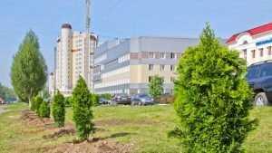 Жителям Брянска предложили сделать город чище и зеленее