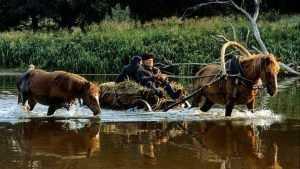 О жизни брянской глубинки миру рассказали снимками Николая Шпиленка
