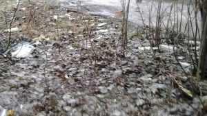 Приставы вынудили брянских чиновников убрать мусор на Ямской