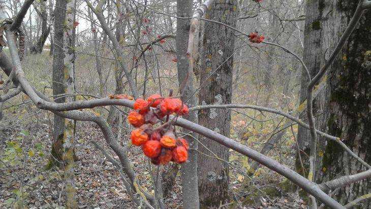 В Брянске поставлен жаркий температурный рекорд декабря