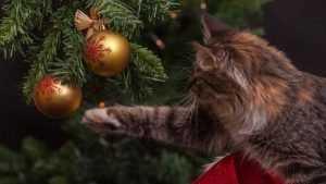 Традиционные елочные базары откроются в Брянске 20 декабря