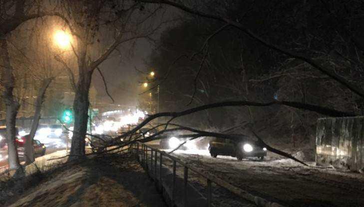 В Брянске дорогу перекрыло рухнувшее дерево