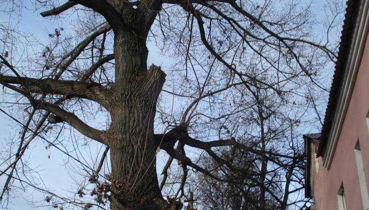 спилить дерево возле дома