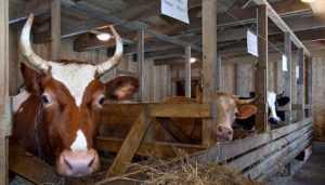Работника брянской фермы оштрафовали за тяжёлую травму коллеги