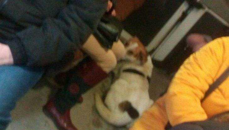 Брянцев растрогал пёс-безбилетник из маршрутки № 18
